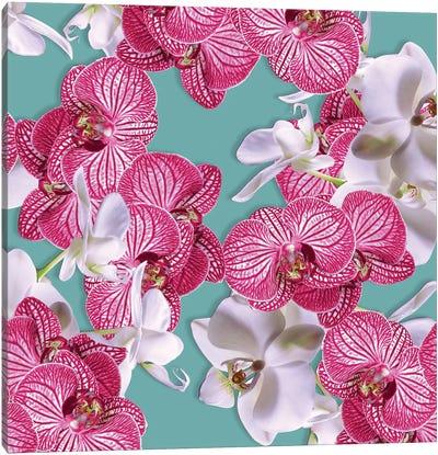 Photographic Orchids Canvas Art Print
