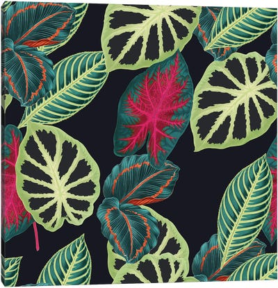 Tropical Leaves Canvas Art Print