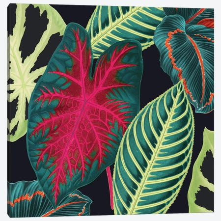 Tropical Leaves Crop Canvas Print #NYB53} by New York Botanical Garden Canvas Artwork