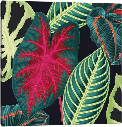 Tropical Leaves Crop Canvas Art Print