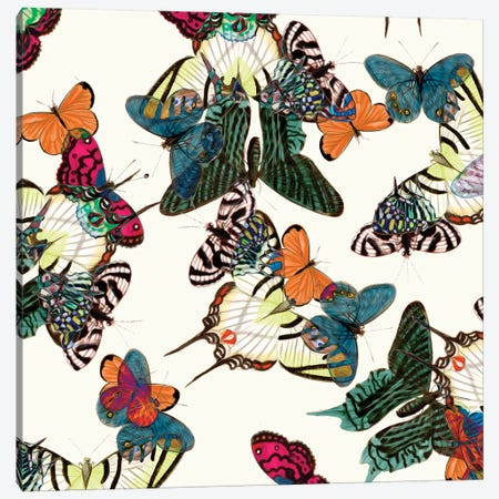 Varicolored Butterflies Canvas Print #NYB54} by New York Botanical Garden Portfolio Canvas Print
