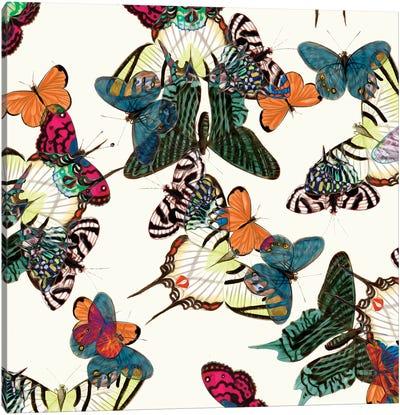 Varicolored Butterflies Canvas Art Print