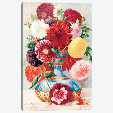 Dahlias From Seed Canvas Print #NYB6} by New York Botanical Garden Canvas Wall Art