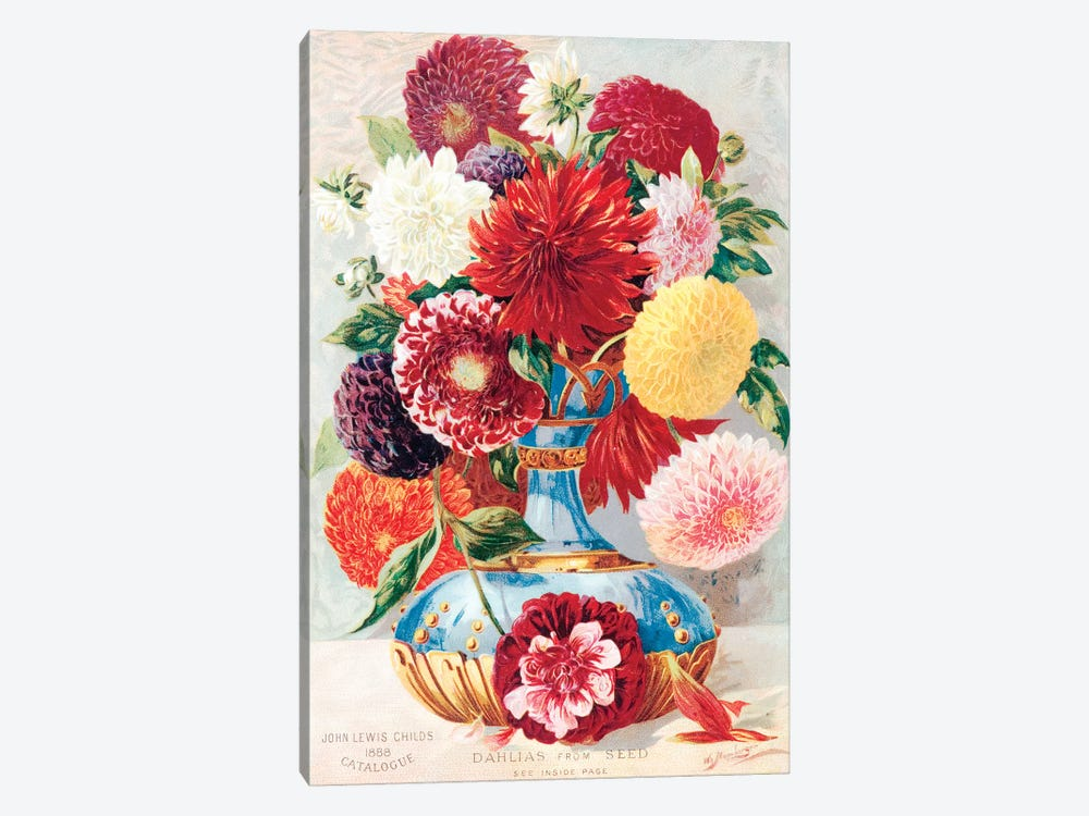 Dahlias From Seed by New York Botanical Garden 1-piece Canvas Art Print