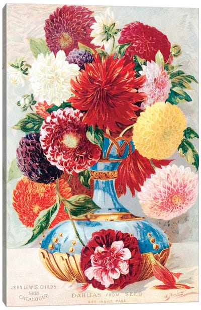 Dahlias From Seed Canvas Art Print