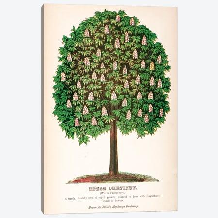 Elliot's Landscape Gardening White Flowering Horse Chestnut Advertisement Canvas Print #NYB8} by New York Botanical Garden Portfolio Art Print