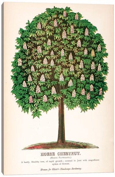 Elliot's Landscape Gardening White Flowering Horse Chestnut Advertisement Canvas Art Print