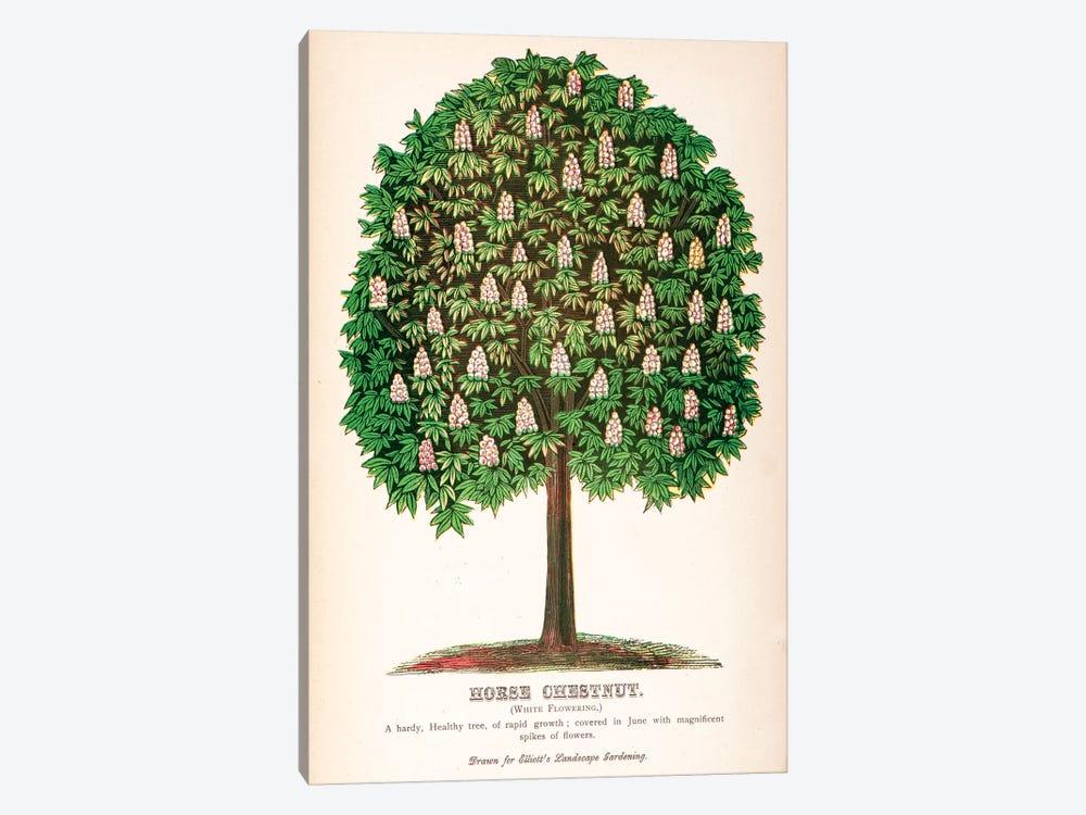 Elliot's Landscape Gardening White Flowering Horse Chestnut Advertisement by New York Botanical Garden Portfolio 1-piece Art Print