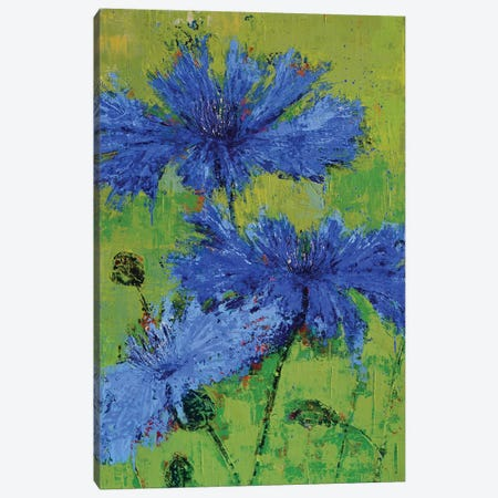 Cornflowers II Canvas Print #OBO21} by Olena Bogatska Canvas Art