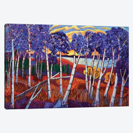 Birch Stand At Sundown Canvas Print #OCN5} by James O'Connell Art Print