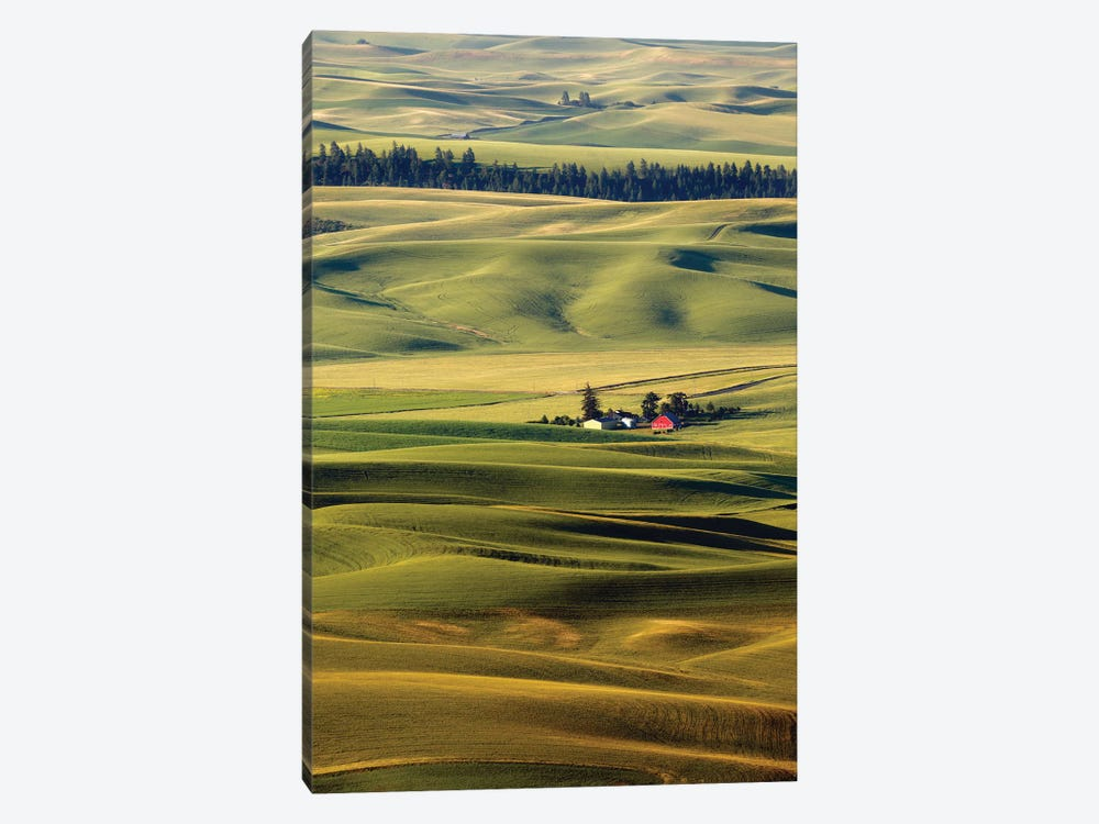 Palouse XXVII by Dale O'Dell 1-piece Canvas Art