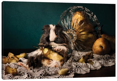 Still Life Gone Wrong - The Guinea Pig Canvas Art Print