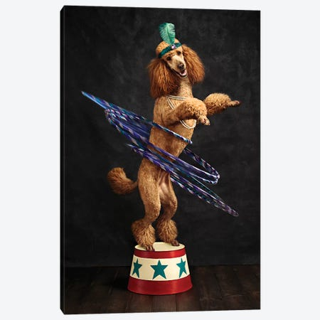 The Poodle Hula Hoop Extraordinaire Canvas Print #ODT24} by Oddball Tails Canvas Artwork