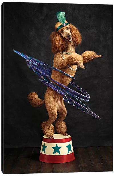 The Poodle Hula Hoop Extraordinaire Canvas Art Print