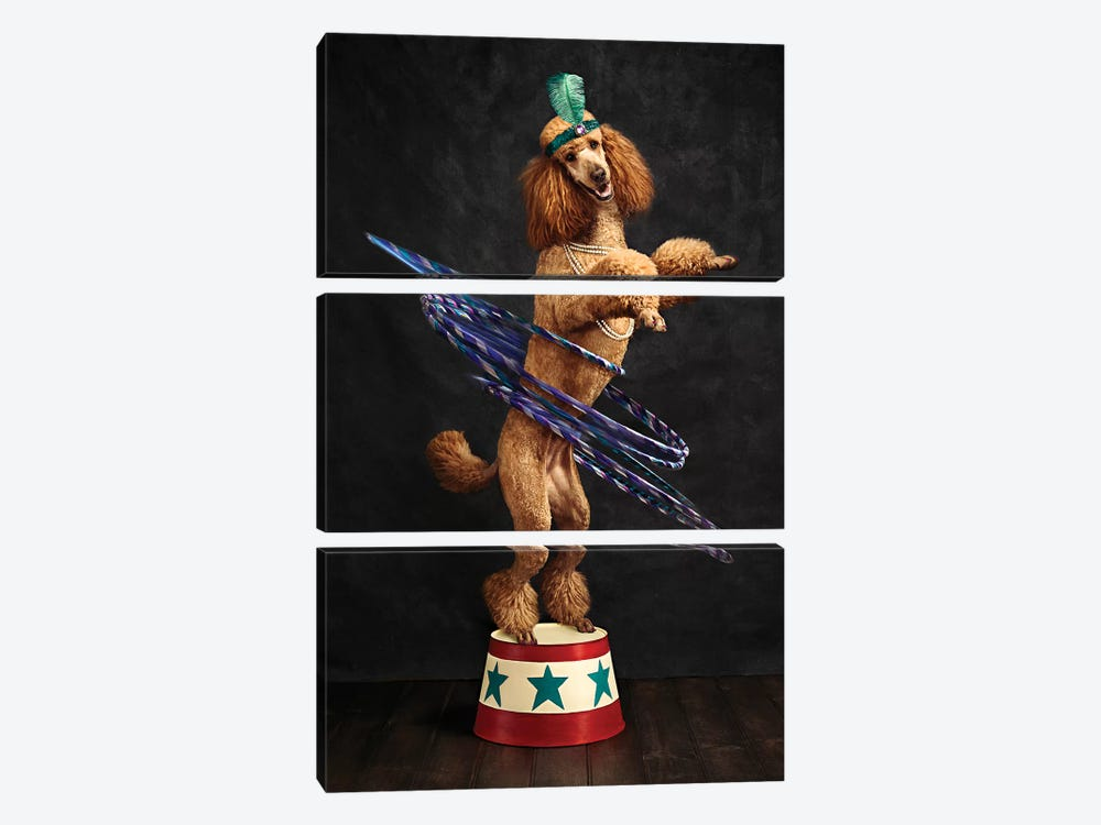 The Poodle Hula Hoop Extraordinaire by Oddball Tails 3-piece Canvas Art