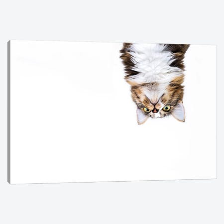 Upside Down Cat Canvas Print #ODT32} by Oddball Tails Canvas Artwork