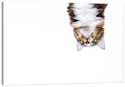 Upside Down Cat Canvas Art Print