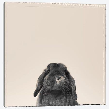 Peekaboo Bunny Canvas Print #ODT9} by Oddball Tails Canvas Art