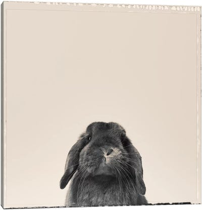 Peekaboo Bunny Canvas Art Print