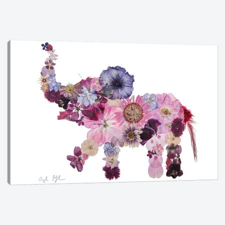 Elephant-Evelyn Canvas Print #OFC11} by Oxeye Floral Co Canvas Wall Art