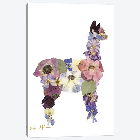 Llama Canvas Print #OFC17} by Oxeye Floral Co Canvas Print