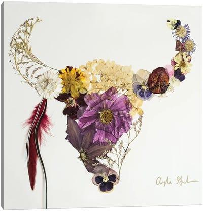 Buffalo Beau Canvas Art Print