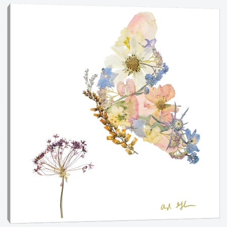 Butterfly Canvas Print #OFC7} by Oxeye Floral Co Art Print