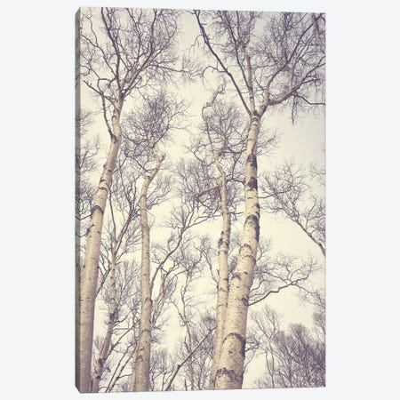 Birch Trees Canvas Print #OJS101} by Olivia Joy StClaire Art Print
