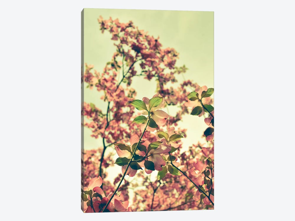 Blossom by Olivia Joy StClaire 1-piece Canvas Print