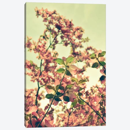 Blossom Canvas Print #OJS102} by Olivia Joy StClaire Canvas Art Print