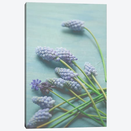 Blue Floral Still Life Canvas Print #OJS103} by Olivia Joy StClaire Canvas Print