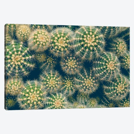Cactus Canvas Print #OJS106} by Olivia Joy StClaire Canvas Wall Art