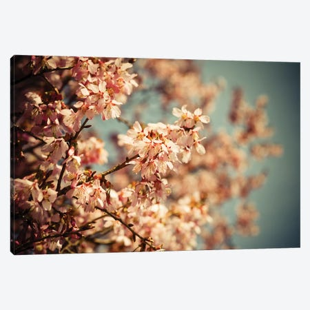 Coy Canvas Print #OJS112} by Olivia Joy StClaire Canvas Wall Art
