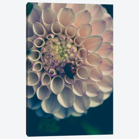 Dahlia, Blush Canvas Print #OJS114} by Olivia Joy StClaire Art Print
