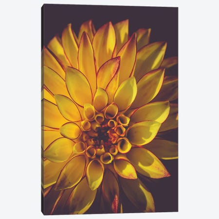 Dahlia, Yellow Canvas Print #OJS115} by Olivia Joy StClaire Art Print