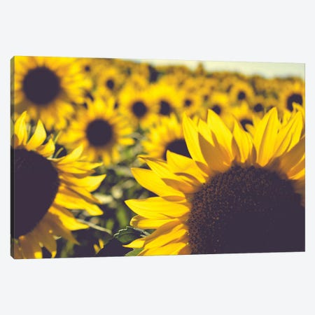 Dreamy Summer Sunflowers II Canvas Print #OJS119} by Olivia Joy StClaire Canvas Wall Art