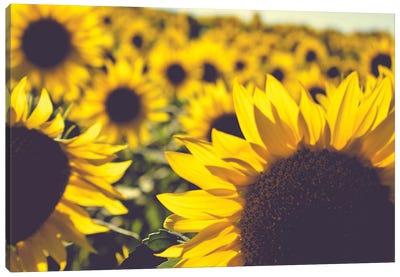 Dreamy Summer Sunflowers II Canvas Art Print