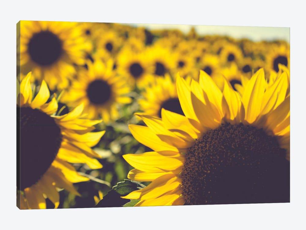 Dreamy Summer Sunflowers II by Olivia Joy StClaire 1-piece Canvas Print