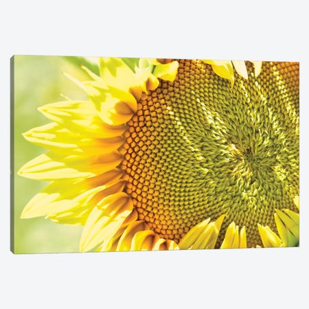 Dreamy Summer Sunflowers V Canvas Print #OJS121} by Olivia Joy StClaire Art Print