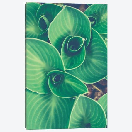 Emerging Leaves Canvas Print #OJS123} by Olivia Joy StClaire Canvas Print