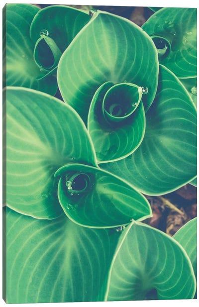 Emerging Leaves Canvas Art Print