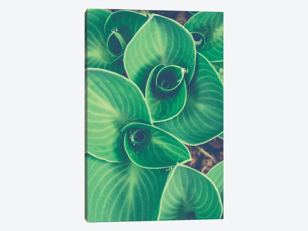 Emerging Leaves by Olivia Joy StClaire 1-piece Canvas Wall Art