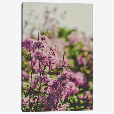 Fading Love Canvas Print #OJS126} by Olivia Joy StClaire Canvas Wall Art