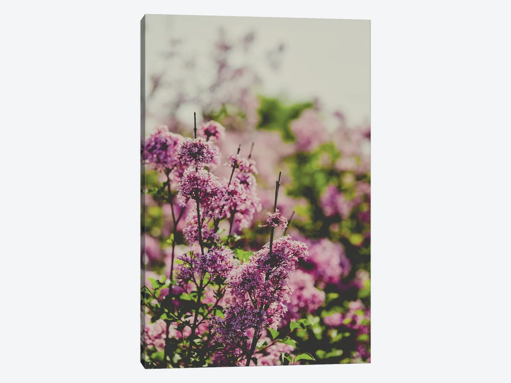 Fading Love by Olivia Joy StClaire 1-piece Canvas Print
