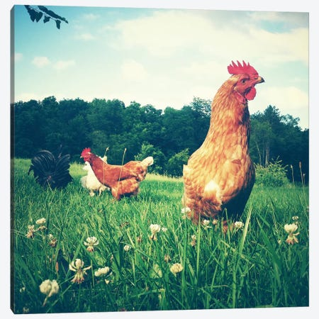 Chickens Canvas Print #OJS12} by Olivia Joy StClaire Canvas Artwork