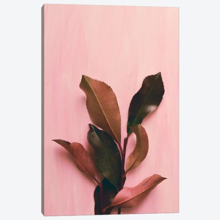 Foliage I Canvas Print #OJS133} by Olivia Joy StClaire Canvas Artwork