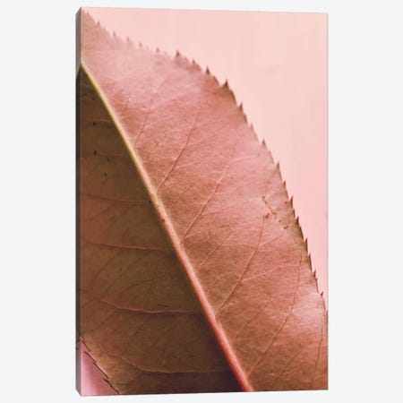 Foliage II Canvas Print #OJS134} by Olivia Joy StClaire Art Print