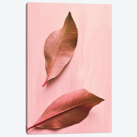 Foliage III Canvas Print #OJS135} by Olivia Joy StClaire Art Print