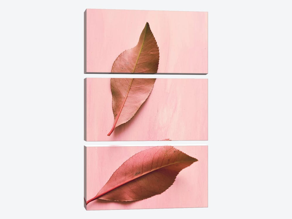 Foliage III by Olivia Joy StClaire 3-piece Canvas Art Print