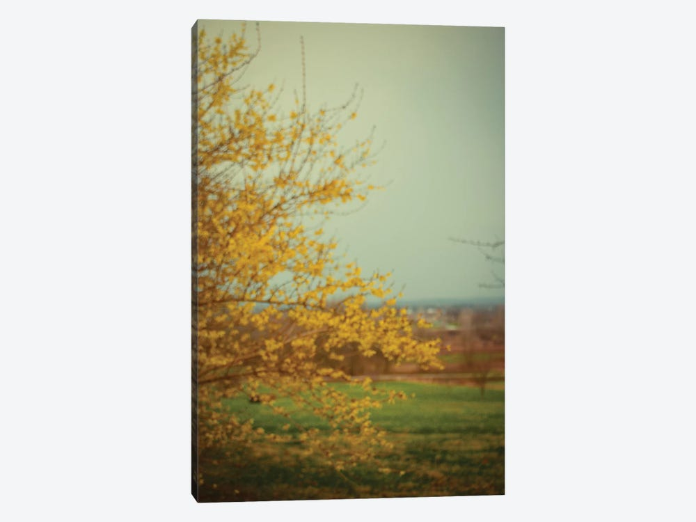 Forsythia by Olivia Joy StClaire 1-piece Canvas Artwork